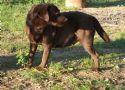 foto cucciolo