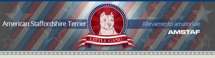 Little gang kennel