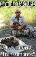Cani da tartufo, Korthals, Lagotto Romagnolo