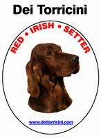 Setter irlandese