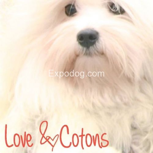 Love&cotons