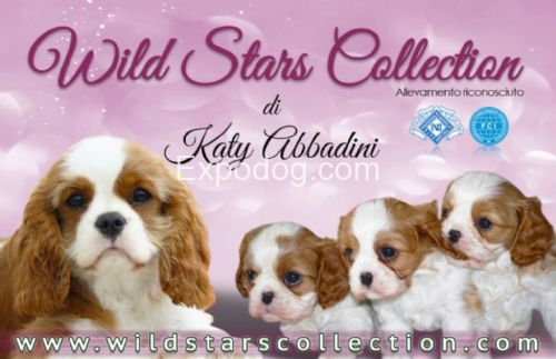 Wild stars collection