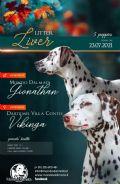 cucciolo dalmata-calabria-mondo-dalmata-22767