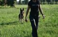 Wolf In Dog asd